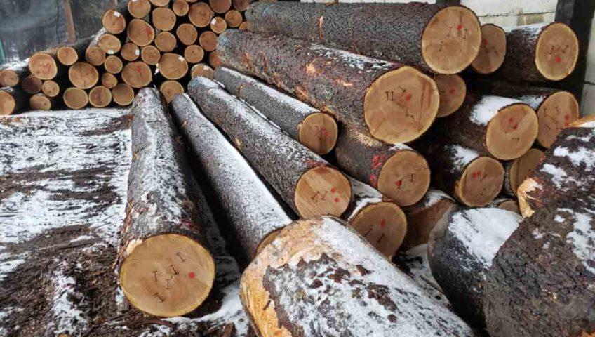 gỗ anh đào là gì