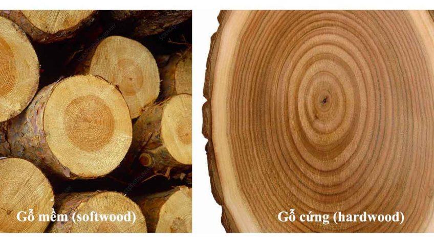 Gỗ cứng và gỗ mềm