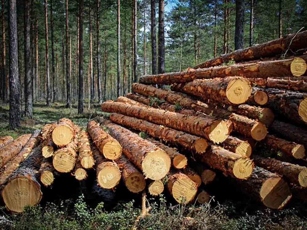 gỗ ván ép bao bì đóng gói